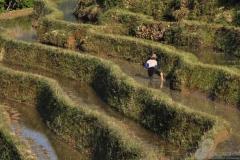 1.Rice-Terrace