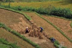 10.Rice-Terrace