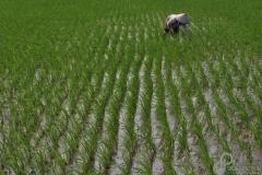 5.Rice-Terrace