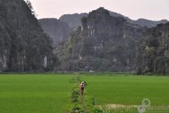 7.Rice-Terrace