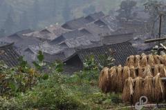 8.Rice-Terrace