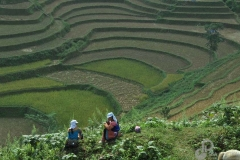 9.Rice-Terrace